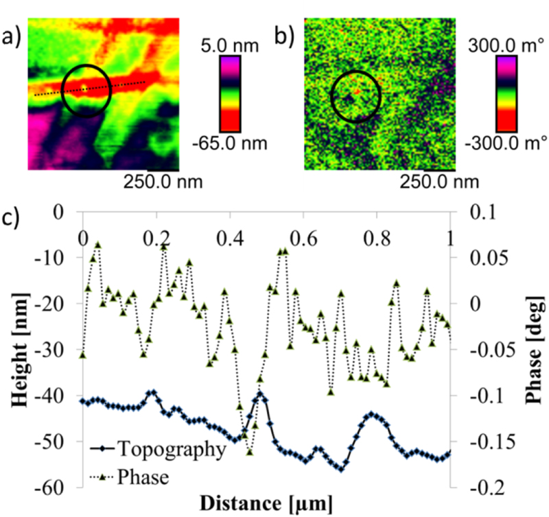Figure 12 from: A. Krivcov et. al, Understanding electrostatic and magnetic forces in magnetic force microscopy: towards single supermagnetic nanoparticle resolution: Figure 12. (a) topography of copper substrate with single magnetite nanoparticle; (b) phase image in 11 nm lift height with an attraction at the place of the nanoparticle; (c) Cross section of a single magnetite nanoparticle (dotted line in (a)) with 10 nm diameter taken on copper substrate with NANOSENSORS SSS-MFMR AFM probe