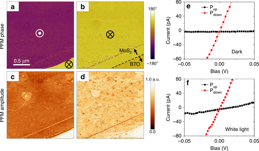 "Figure 1 from ""Optical control of polarization in ferroelectric heterostructures"": Electrically induced polarization switching in the MoS2/BaTiO3/SrRuO3 junction. a, b PFM phase (a) and amplitude (b) images after application of a negative voltage pulse (−5 V, 0.5 s) to the MoS2 flake. The 12-u.c.-thick BTO film underneath the MoS2 flake is fully switched to the upward polarization, Pup. c, d PFM phase (c) and amplitude (d) images after application of several positive voltage pulses (+5 V, 0.5 s) to the MoS2 flake. BTO underneath the MoS2 flake is fully switched to downward polarization, Pdown. The polarization state of the bare BTO film (at the lower right corner) is not affected by the electrical bias. e, f The I–V characteristics of the same junction measured in the dark and during illumination. The tunneling current for the OFF state (Pup) is largely increased under illumination. Silicon AFM probes with Pt/Ir conductive coating and nominal stiffness of 3 N m−1 (PPP-EFM, NANOSENSORS) were used to perform the KPFM and PFM measurements."