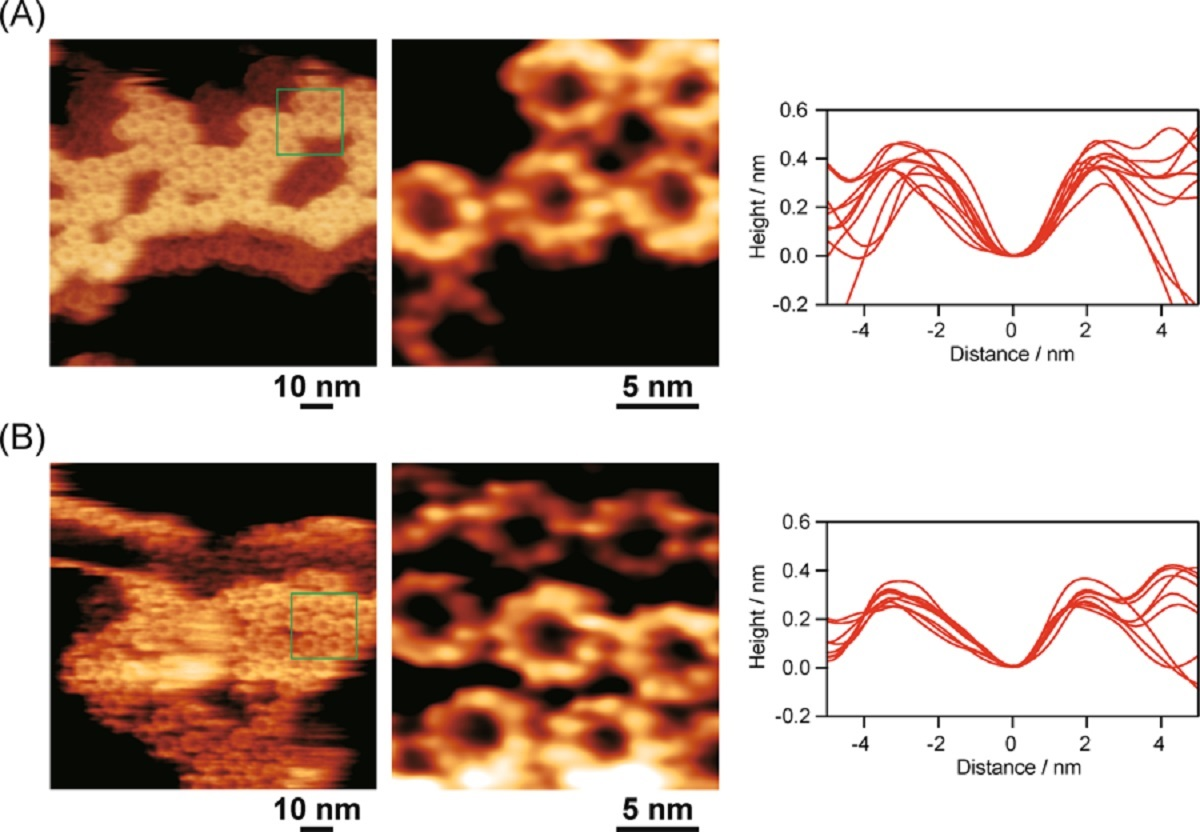 "Figure 6 from «Selective oxidation of B800 bacteriochlorophyll a in photosynthetic light-harvesting protein LH2"" by Y. Saga et al.: FM-AFM images of native LH2 (A) and oxidized LH2 (B) adsorbed on mica taken in 20 mM Tris buffer containing 150 mM NaCl (pH 8.0). Left: wide images. Middle: locally enlarged images of single LH2 proteins. Right: overlapped height-profiles of ten proteins. NANOSENSORS PPP-NCHAuD AFM probes were used."