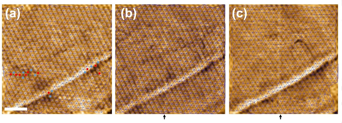 "figure 8 from ""Observation of a gel of quantum vortices in a superconductor at very low magnetic fields"" by José Benito Llorens et al.: Behavior of the hexagonal vortex lattice as a function of temperature measured with MFM. In (a)–(c), the images are taken at 2.75,3.75, and 4.5 K, respectively at 300 G. The color scale represents the observed frequency shift. Scale bar is 1μm. Blue lines are the Delaunay triangulation of vortex positions. Blue and red points in (a) highlight vortices with seven and five nearest neighbors respectively. The dark arrow at the bottom highlights the position of the vertical line discussed in the text."