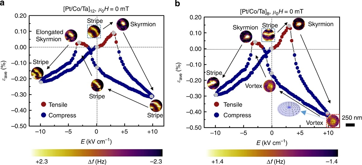 """Figure 2 from """"Electric-field-driven non-volatile multi-state switching of individual skyrmions in a multiferroic heterostructure"""" by Yadong Wang et al.: Electric-field-induced switching of individual skyrmion. The transferred average strain εave and corresponding magnetic domain evolution processes in the d ~ 350nm a [Pt/Co/Ta]12 and b [Pt/Co/Ta]8 nano-dots in a cycle of E ranging from +10 to −10kVcm−1. Positive εave (red dots) represents tensile strain while negative εave (blue dots) represents compressive strain. μ0H represents the external magnetic field except that from the MFM tip and here μ0H is equal to be 0mT. The inset of b illustrates the spin texture of the magnetic domain that is encompassed by the red box. The stripe domain enclosed by the black box shows the initial state of the magnetic domain evolution path. The gray dots represent the corresponding electric field for the MFM images. The MFM contrast represents the MFM tip resonant frequency shift (Δf). The scale bar represents 250nm.  NANOSENSORS™ PPP-LM-MFMR low moment magnetic AFM probes were used"""