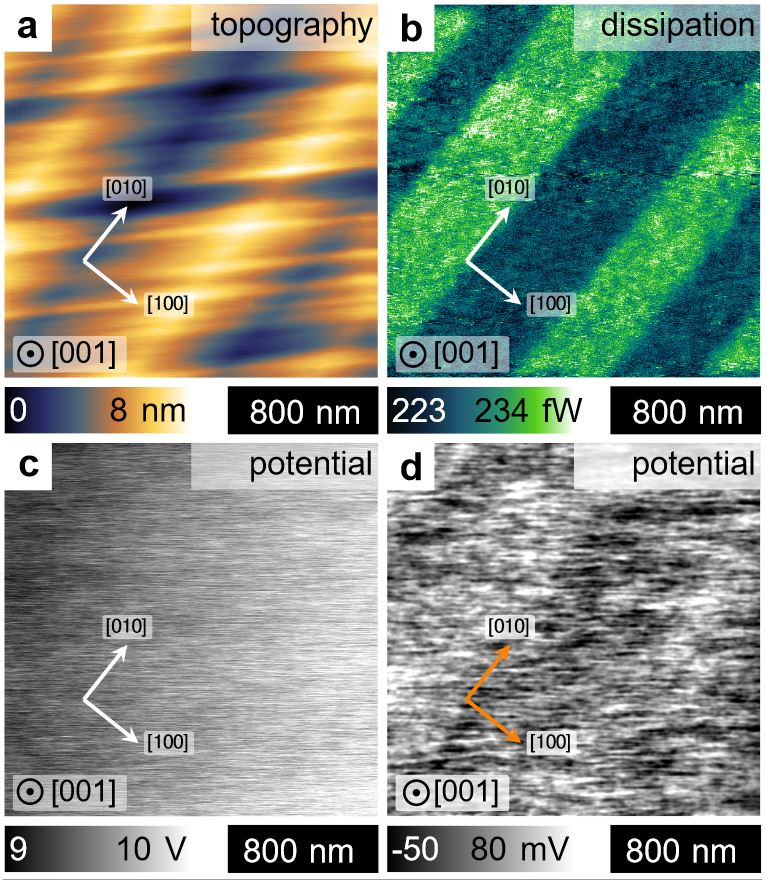 "Supplementary Figure 1 a – d from ""Macroscopic manifestation of domain-wall magnetism and magnetoelectric effect in a Néel-type skyrmion host"" by K. Geirhos et al:  Typical ferroelectric do-main pattern observed on the (001) cleaved GaV4Se8 crystal surface  atT=10  K. a, The topography is characterized by stripes roughly parallel to the [110] axis and folds parallel to the [010]  axis. The latter originate in the differently oriented distortion of the ferroelastic domains. The color scale corresponds to the z-displacement of the tip. b ,In the dissipation channel of the nc-AFM every second domain appears bright. For the non-magnetic tip the dissipation originates from electric interactions. The dissipated power is indicated by the color scale. Please have a look at the full article to view the full supplementary figure. NANOSENSORS Platinum Silicide PtSi-FM AFM probes were used for the imaging."
