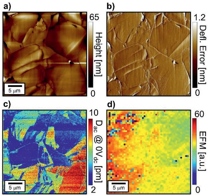 "Figure 1 from Nino Schön et al. «Signal Origin of Electrochemical Strain Microscopy and Link to Local Chemical Distribution in Solid State Electrolytes"": a) Topography, b) deflection error, and c) corresponding cantilever deflection change (Dac) map of a 30 µm × 30 µm area of LATP. d) Noncontact EFM amplitude map in the same area. NANOSENSORS conductive platinum-iridium coated PointProbe Plus PPP-EFM AFM probes were used."